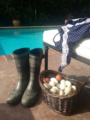 Boots and Eggs